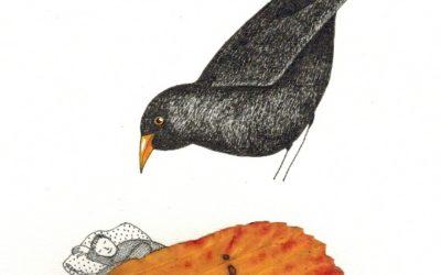 Merle d'automne